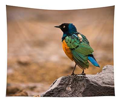 Superb Starling Tapestry