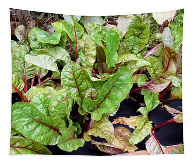 Swiss Chard In A Vegetable Garden 1 Tapestry