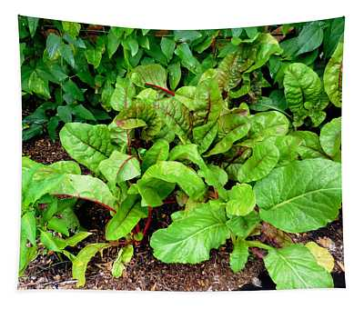 Swiss Chard In A Vegetable Garden 2 Tapestry