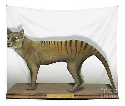 Tasmanian Tiger-thylacinus Cynocephalus-tasmanian Wolf-lobo De Tasmania-tasmanian Loup-beutelwolf    Tapestry