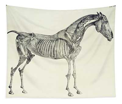 The Anatomy Of The Horse Tapestry