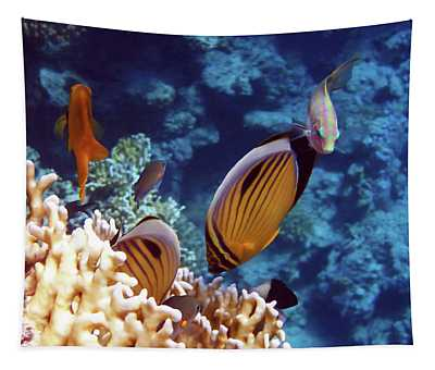 The Best Of The Red Sea Tapestry