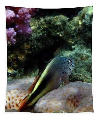 The Blackside Hawkfish Red Sea Tapestry
