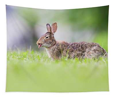 The Cottontail Tapestry