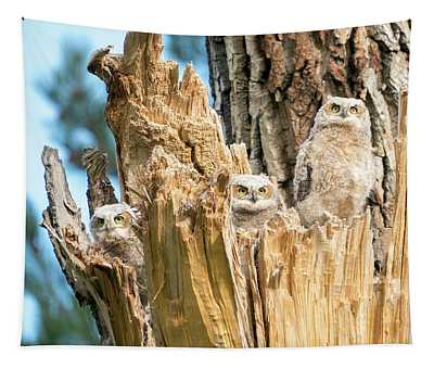Three Great Horned Owl Babies Tapestry