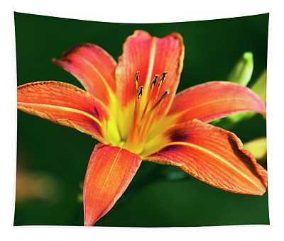 Tapestry featuring the photograph Tiger Lily by Christina Rollo