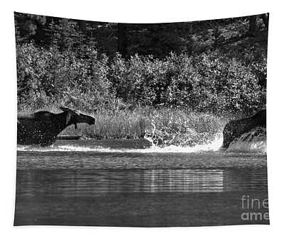 Too Close For Comfort Black And White Tapestry