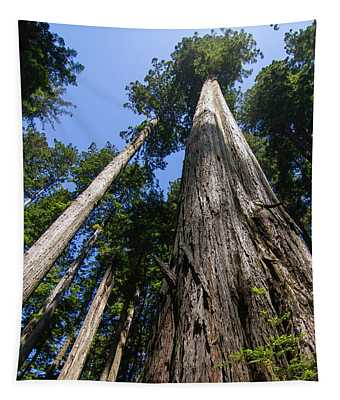 Towering Redwoods Tapestry