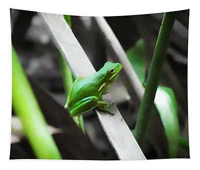 Tree Frog Tapestry