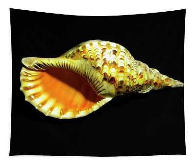 Triton Trumpet Seashell Cymatium Tritonis Tapestry
