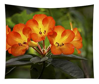 Tropical Rhododendron Tapestry