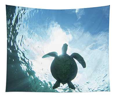 Turtle Light Tapestry