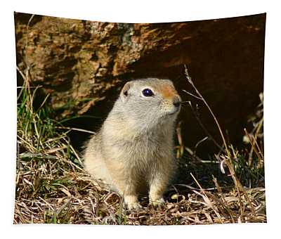 Uinta Ground Squirrel Tapestry