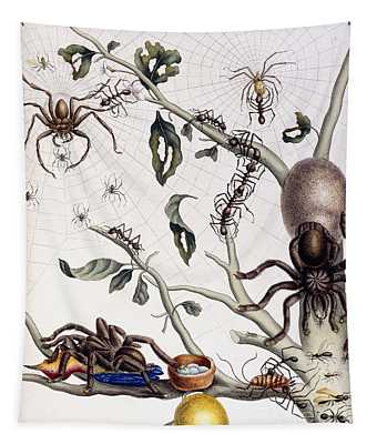 Various Arachnids From South America, 1726  Tapestry