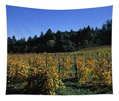 Vineyard In Fall, Sonoma County Tapestry