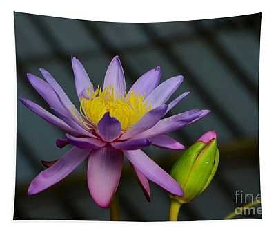 Violet And Yellow Water Lily Flower With Unopened Bud Tapestry