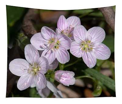 Virginia Or Narrowleaf Spring-beauty Dspf041 Tapestry