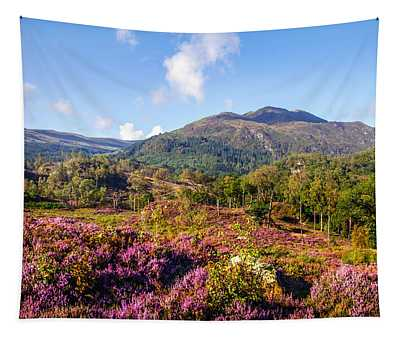 Vivid Glimpses Of Autumn In Trossachs Tapestry