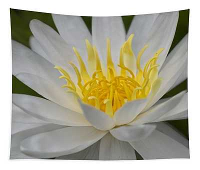 Designs Similar to Water Lily by Ricky Barnard