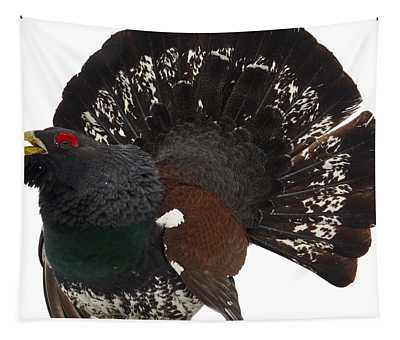 Western Capercaillie Transparent Tapestry