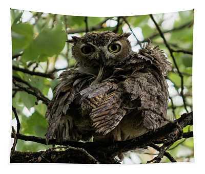 Wet Owl Tapestry