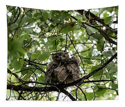 Wet Owl - Wide View Tapestry