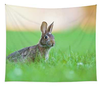 What's Up Doc? Tapestry
