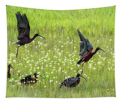 White-faced Ibis Rising, No. 1 Tapestry