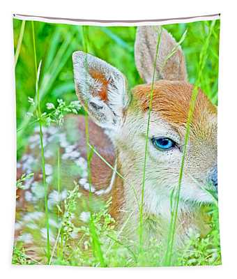 Whitetailed Deer Fawn Tapestry