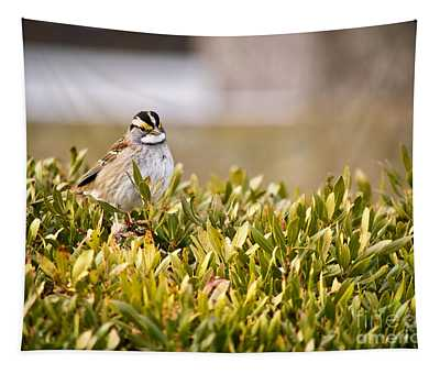 Winter White-throated Sparrow Tapestry