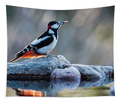 Woodpecker In Backlight Tapestry