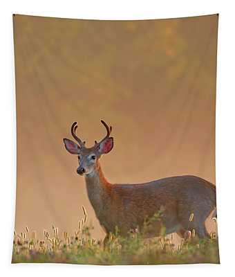Young Buck Square Tapestry