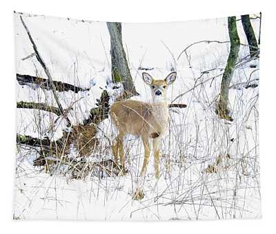 Young Doe And Spring Snow Tapestry