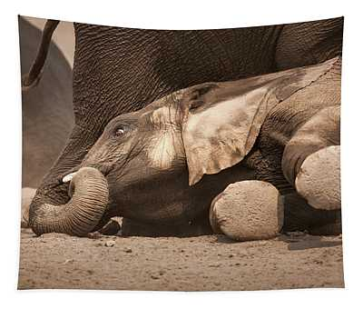 Young Elephant Lying Down Tapestry