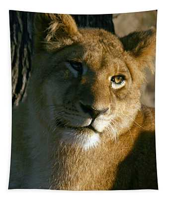 Young Lion Tapestry
