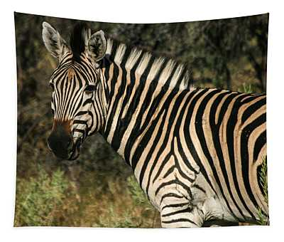 Zebra Watching Tapestry