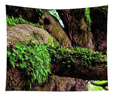 Angel Oak Tree Branches Tapestry