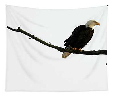 Bald Eagle 120501 Tapestry