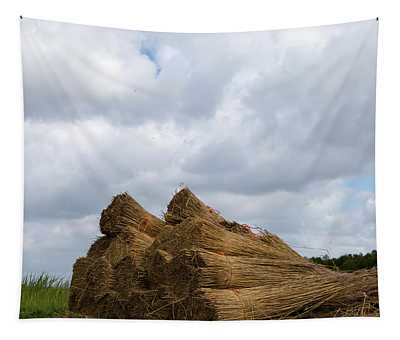 Tapestry featuring the photograph Bound Reeds  by Anjo Ten Kate