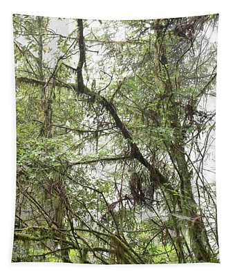 1 Fern Grove Fog, N. California Tapestry