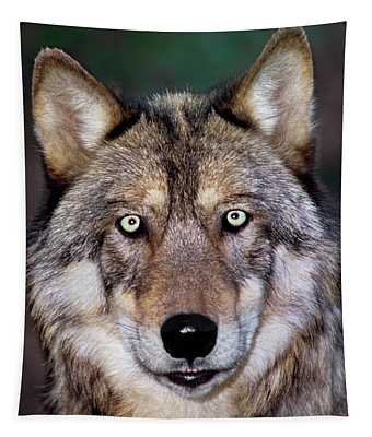 Gray Wolf Portrait Endangered Species Wildlife Rescue Tapestry