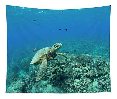 Green Sea Turtle And Fish Swimming Tapestry