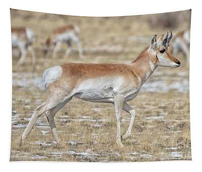 Pronghorn Tapestry