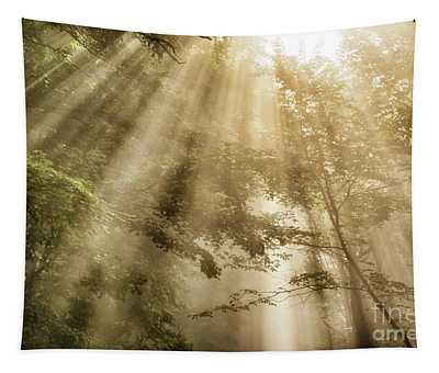 Rays Of Light In Forest Tapestry