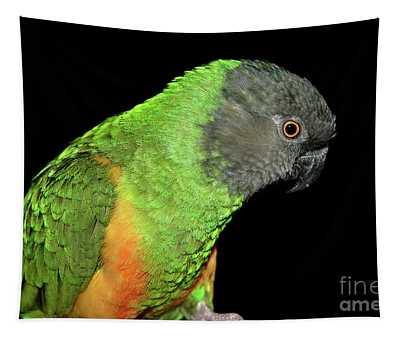 Senegal Parrot Tapestry