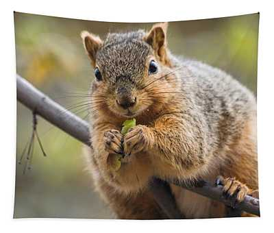 Snacking Squirrel Tapestry