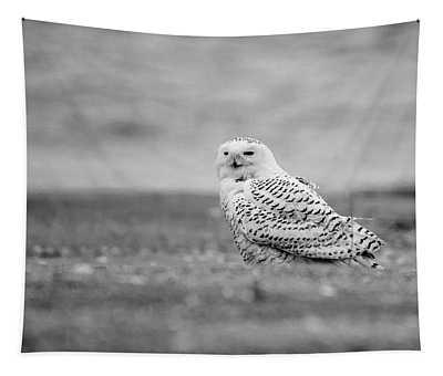 Snowy Owl 5872 Tapestry
