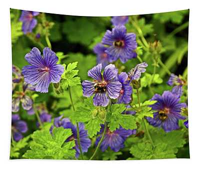 14/06/14  Lancashire. Silverdale. Cranesbill. Tapestry