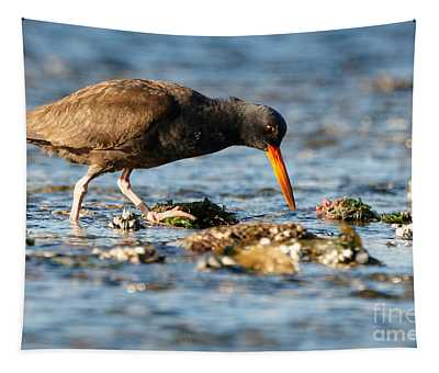 Black Oystercatcher Pacific Coast Tapestry