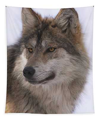 Mexican Grey Wolf Tapestry